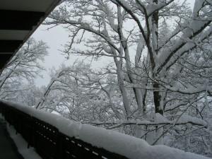 雪はまだまだ降り続いています。