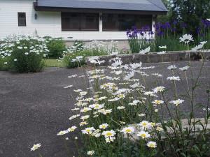 花に囲まれた小道